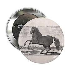 "Alexander the Great's Horse Bucephalu 2.25"" Button"