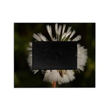 Wonderful Dandelion Picture Frame
