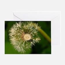 Wonderful Dandelion Greeting Card