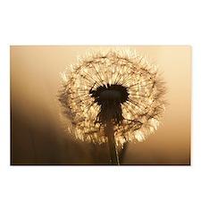 Wonderful Dandelion Postcards (Package of 8)