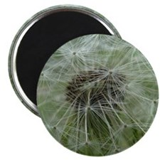 Wonderful Dandelion Magnet