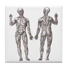 Athletic Muscle Men Anatomy Drawing Tile Coaster