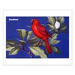 Northern Cardinal Bird Small Poster