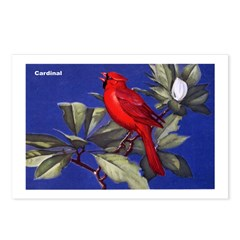 Northern Cardinal Bird Postcards (Package of 8)