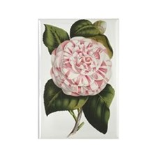 Countess of Derby Camelia Flower Rectangle Magnet