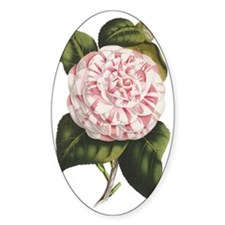 Countess of Derby Camelia Flower Decal