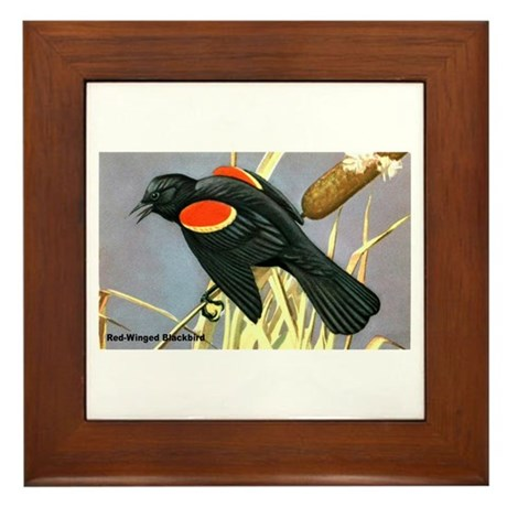 Red-Winged Blackbird Bird Framed Tile