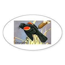 Red-Winged Blackbird Bird Oval Decal
