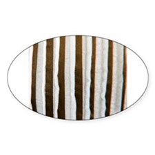 Brown distressed stripes Decal