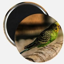 Green Budgie Magnet