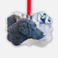 curly coated retriever Ornament