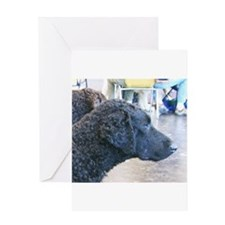 curly coated retriever Greeting Cards
