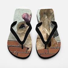 lakeland terrier Flip Flops
