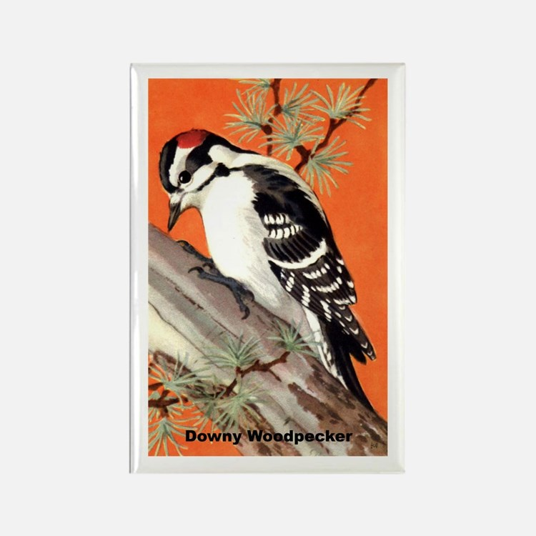 Downy Woodpecker Bird Rectangle Magnet