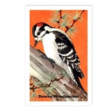 Downy Woodpecker Bird Postcards (Package of 8)