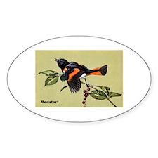 Redstart Bird Oval Decal