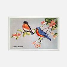 Eastern Bluebird Bird Rectangle Magnet