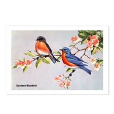 Eastern Bluebird Bird Postcards (Package of 8)