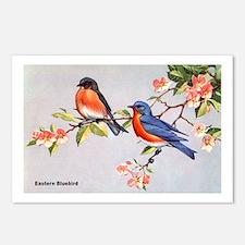 Eastern Bluebird Bird Postcards (Package of 8)