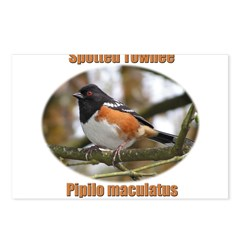Spotted Towhee Postcards (Package of 8)