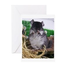 Baby black velvet chinchilla Greeting Card