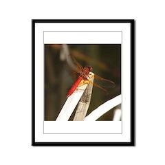 Red Dragonfly Framed Panel Print