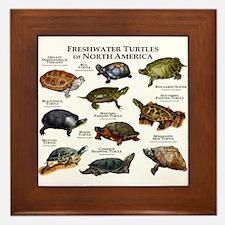 Freshwater Turtle of North America Framed Tile