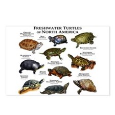 Freshwater Turtle of Nort Postcards (Package of 8)