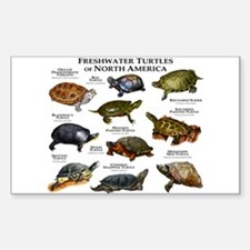 Freshwater Turtle of North Ame Sticker (Rectangle)