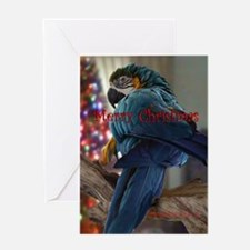 Blue & Gold Macaw Christmas Card. Greeting Car