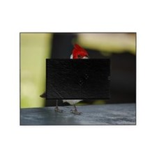 Red Crested Cardinal Picture Frame