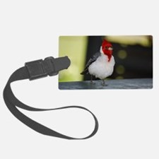 Red Crested Cardinal Luggage Tag