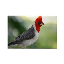 Red Crowned Cardinal Rectangle Magnet