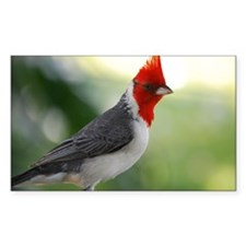Red Crowned Cardinal Decal