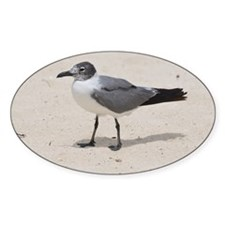 Laughing Gull Standing on a Beach Decal