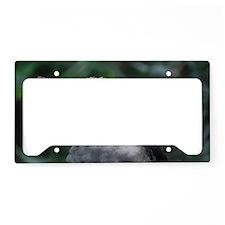Kookaburra License Plate Holder