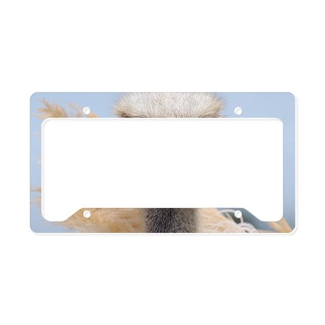 Ostrich Feathers License Plate Holder