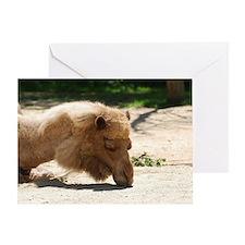 Resting Camel Greeting Card