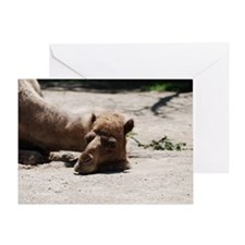 Camel with His Head Down Greeting Card