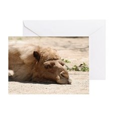 Sleeping Camel Greeting Card
