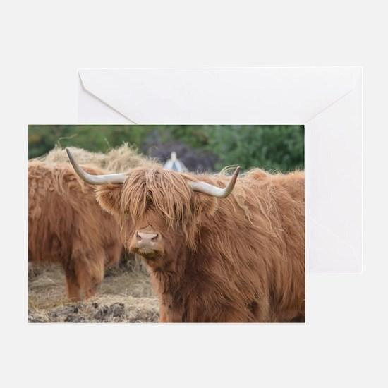 Cute Highland Cow Greeting Card