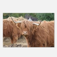 Cute Highland Cow Postcards (Package of 8)
