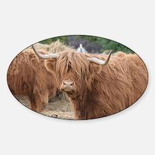Cute Highland Cow Sticker (Oval)