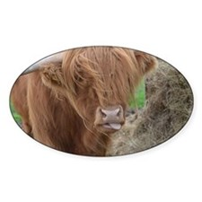 Highland Cow Sticking Out His Tongu Decal
