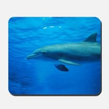 Gorgeous Dolphin Swimming Underwater Mousepad