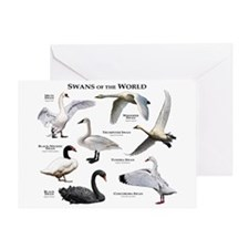 Swans of the World Greeting Card