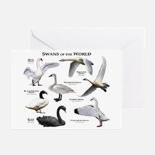 Swans of the World Greeting Cards (Pk of 20)