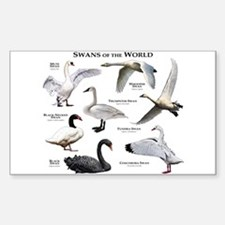 Swans of the World Decal