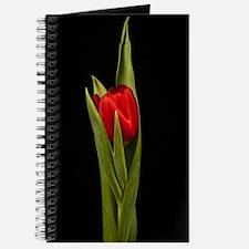 Vibrant Stylish Red Tulip On Black Journal