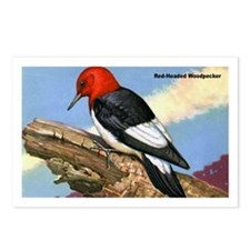Red-Headed Woodpecker Bird Postcards (Package of 8
